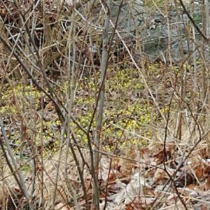 vrtecken utforskaromgivningarna vrthrnpsder mariasgarn