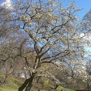 Snart smller det magnolia vrknslor utforskaromgivningarna vrthrnpsder